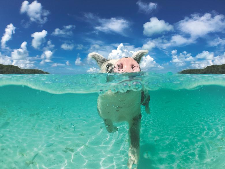 돼지 찾아 떠나요