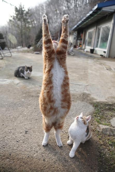 두 발로 걷는 고양이를 만나는 법
