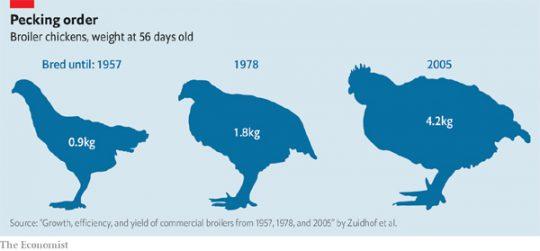 치킨은 어떻게 세계에서 가장 인기 있