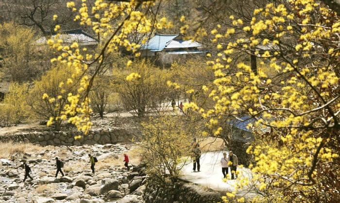 3월 봄축제! 어디로 갈까?