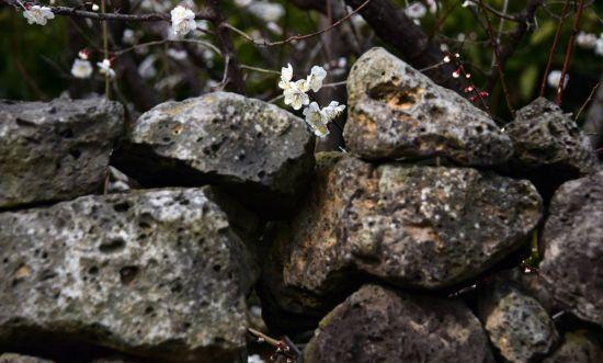 봄비 머금은 봄꽃… 방울방울 봄이 맺