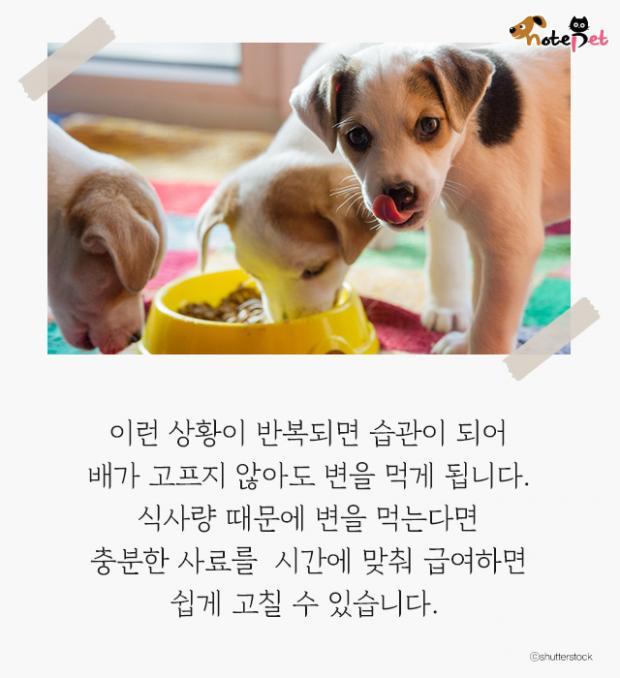 강아지가 똥을 먹는다고?! 왜?!