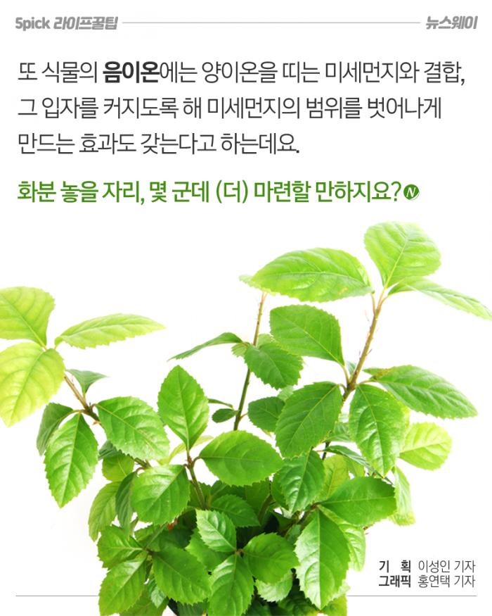 초미세먼지 감소 효과 입증한 식물 두