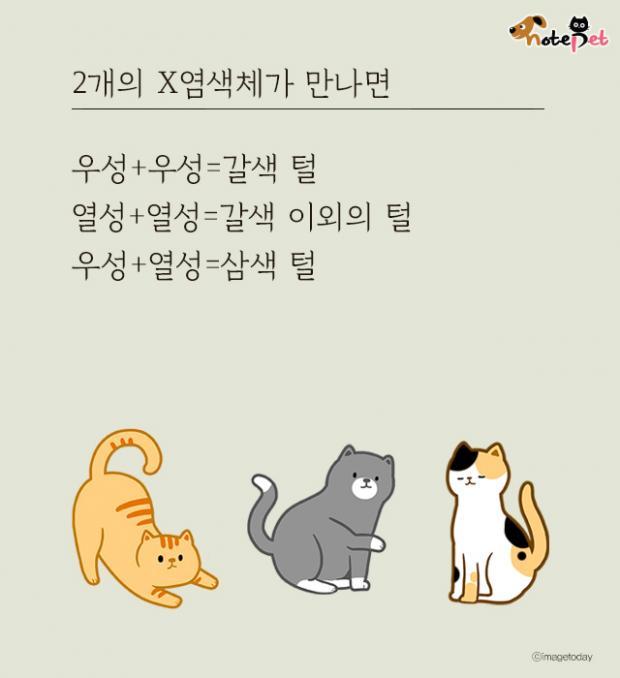 고양이 삼색털의 비밀