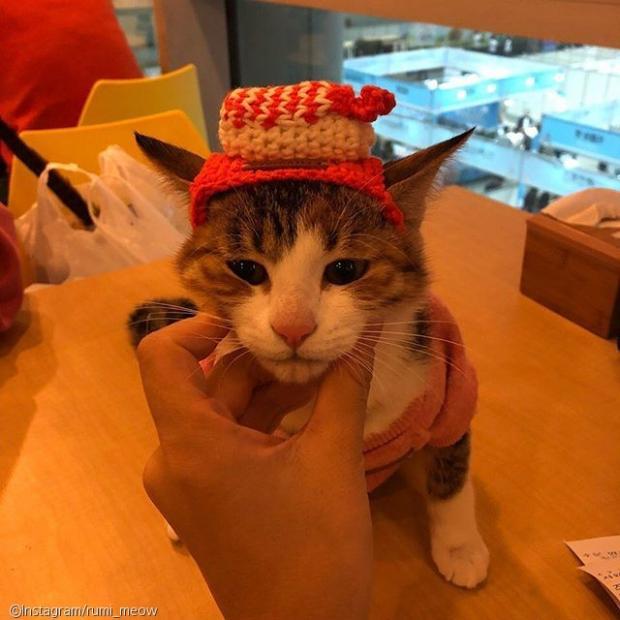 """현실 집사의 생생증언.. """"고양이는"""