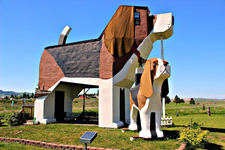 '이런 강아지 같은 호텔이?' 세계에