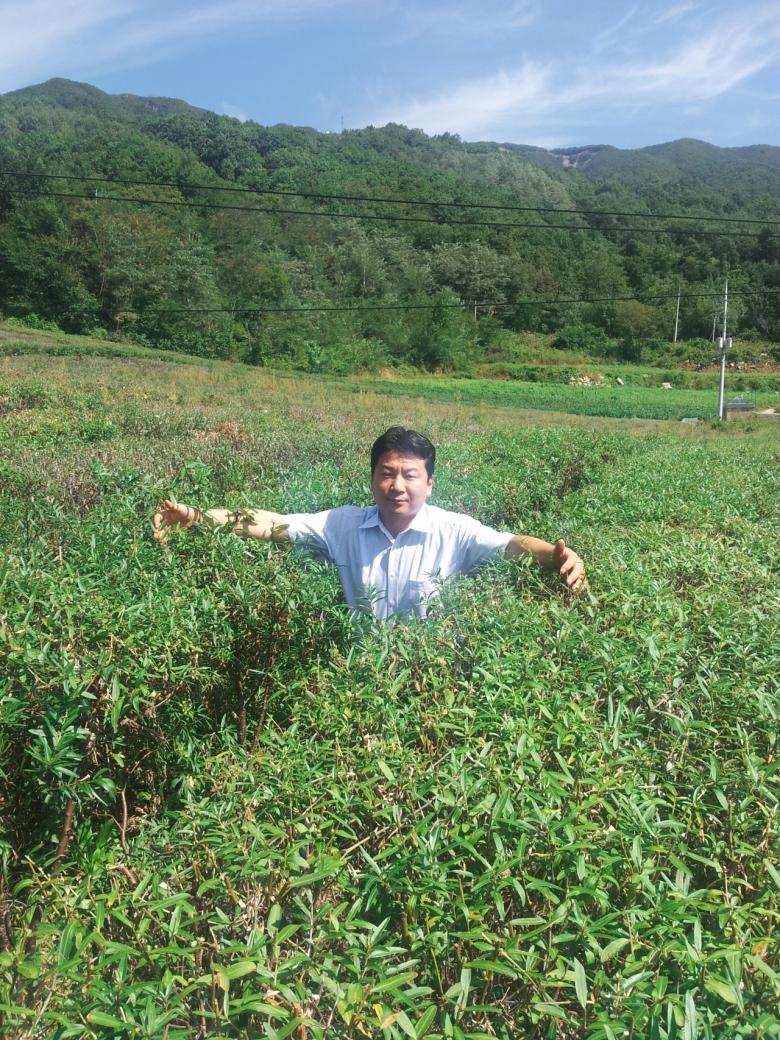 시벅썬베리를 국내에 최초로 들여온 강신훈 비타민나무 연구소장 [비타민나무 연구소 제공]