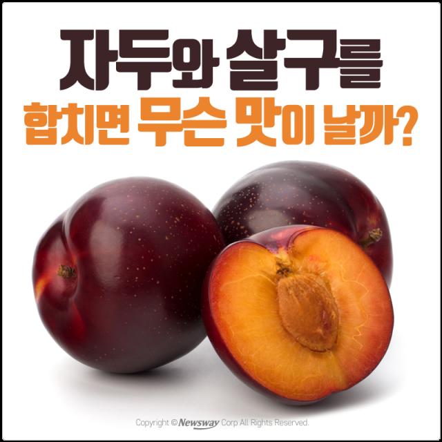 오묘한 맛의 신세계 '퓨전 과일'