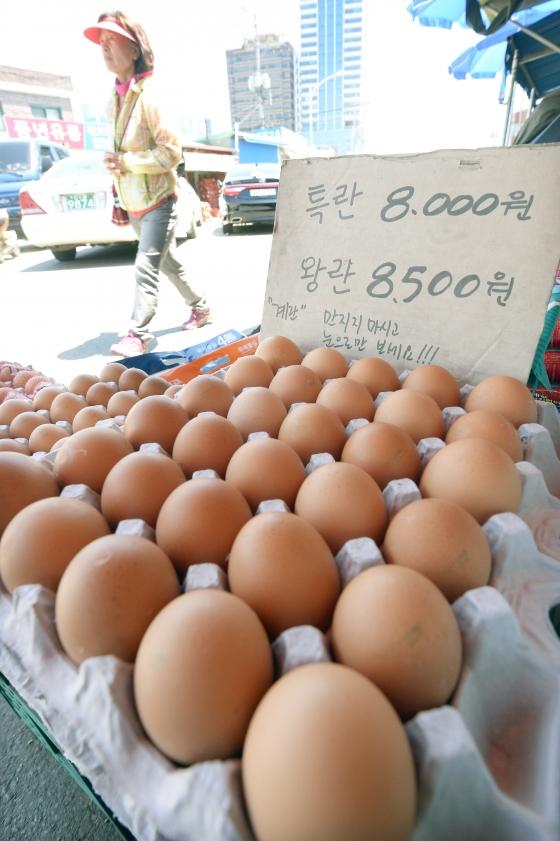"""""""살충제 달걀 이미 4월부터 경고음"""""""