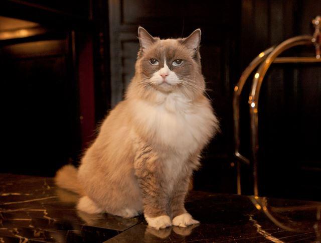 뉴욕 호텔이 80년째 길고양이를 채용