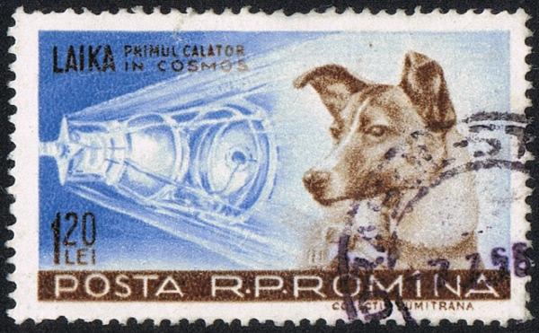 인간 대신 우주 생체실험…미국·소련