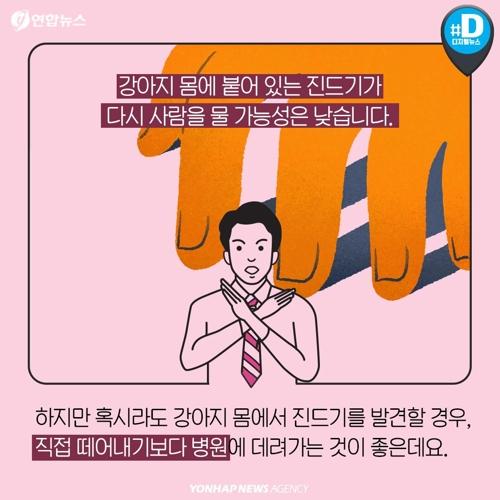"""""""반려견과 뽀뽀한 남성, 살인진드기병"""