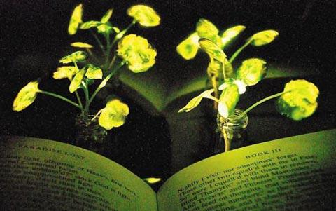 반딧불처럼 식물이 빛을 내다