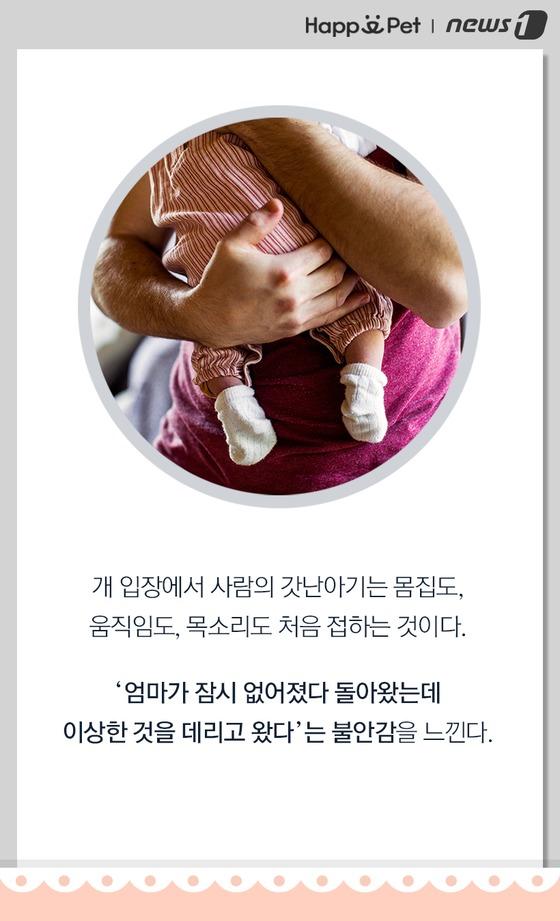 갓난아기에게 질투하는 반려견?