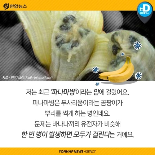 """""""바나나가 지구에서 사라진대요"""""""