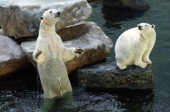 국내 마지막 북극곰 '통키'는 어디에