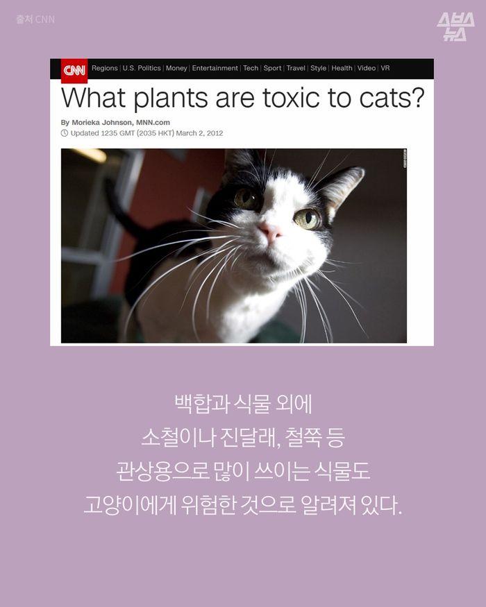 '화분'이 당신의 고양이를 죽일 수도