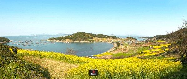 유채꽃이 만발한 슬로시티 '청산도'.