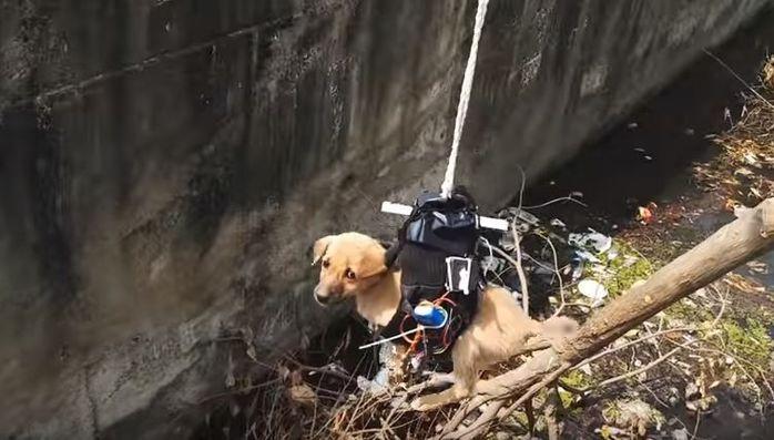 6m 배수구에 빠진 강아지…'드론'으