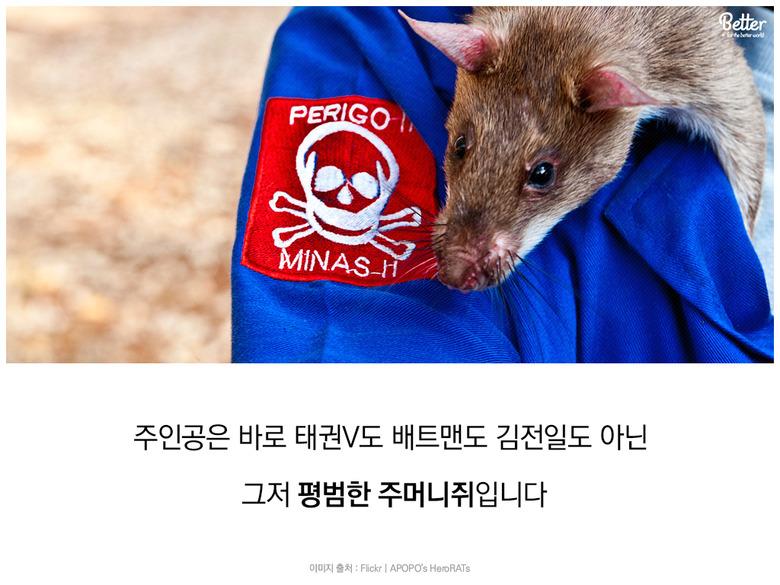 hero RATs