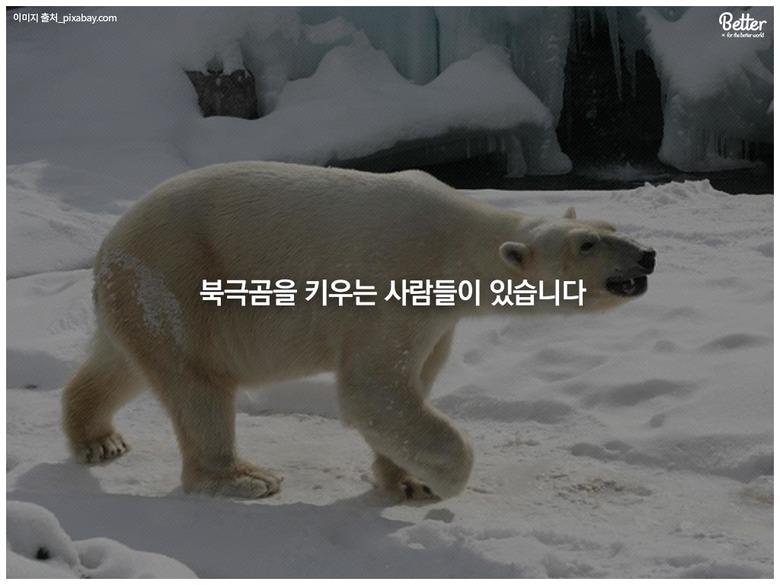 당신의 지붕 위에 북극곰이 살고 있습