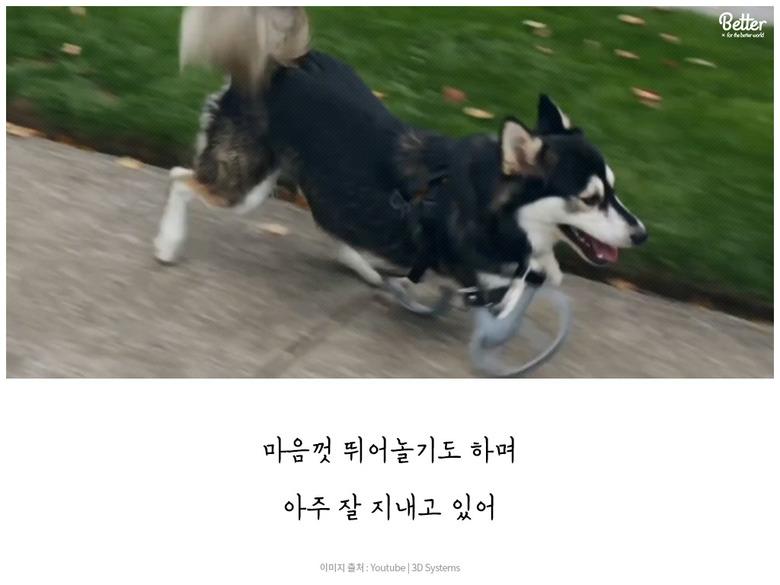 강아지 Derby