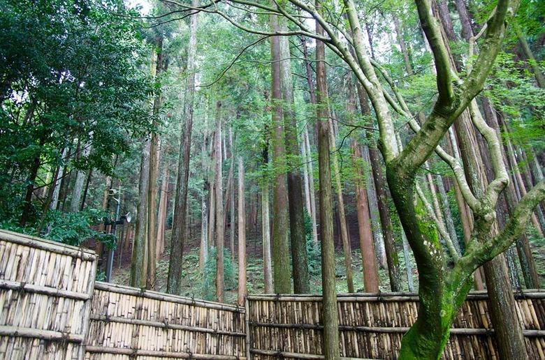 일본 교토 여행