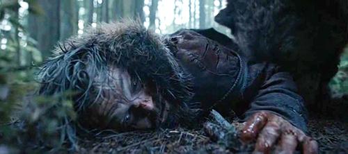 곰 가죽이 의미하는 '조화'(harm