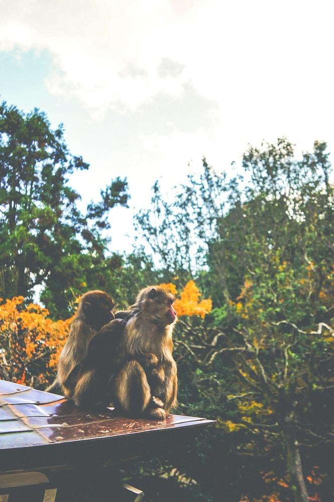 다카사키야마 자연동물원, 이 산에 원