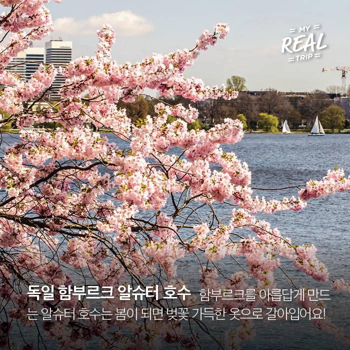 유럽의 벚꽃 명소 BEST 8