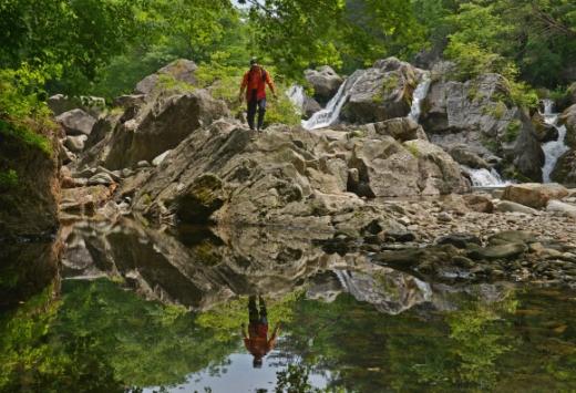 숲·계곡물·바위… 초록 물감 풀어놓은