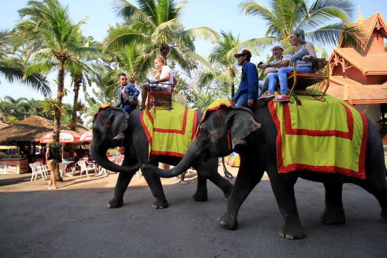 코끼리를 타는 것은 옳은 일일까