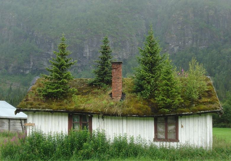 지붕 위에 숲을 담은 친환경 보금자리