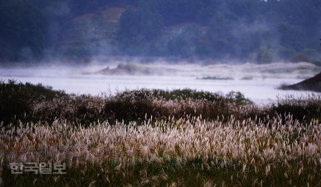 억새 위로 피어오르는 새벽 물안개…몽
