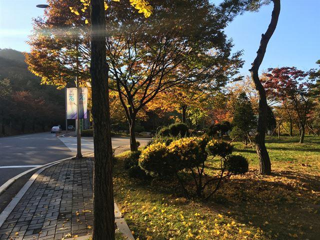 캠퍼스의 축복, '그곳'에서 가을 즐