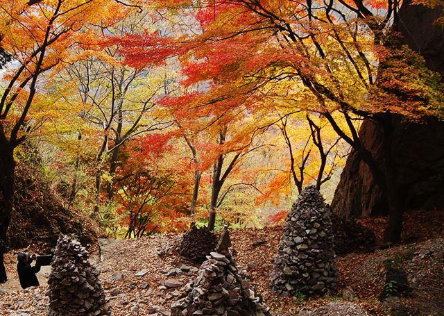 단풍과 낙엽, 붉은 터널에 홀리다