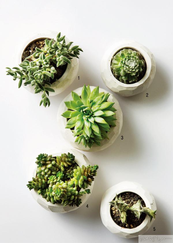 내겐 너무 예쁜 못난이 식물