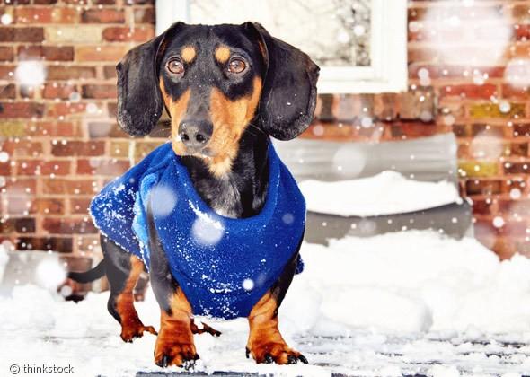 겨울철 신발·외투가 필요한 개들