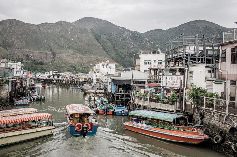 홍콩 타이오 마을, 핑크 돌고래가 사