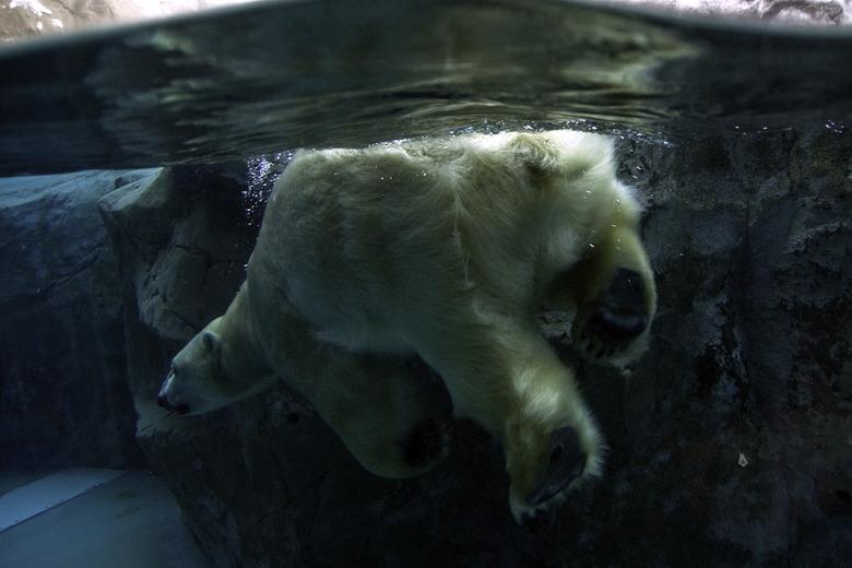 동물원으로 떠나는 특별한 홋카이도 여