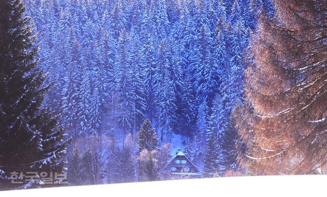 독일 흑림… 푸름이 빼곡해 찬란한 검