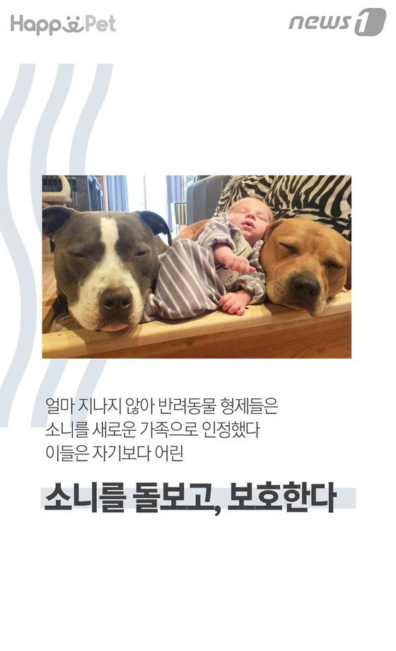 """""""우린 아기 돌보는 반려동물 형제랍니"""