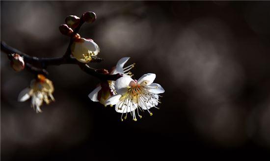 봄꽃은 구경도 못하고 바다꽃만 피었구