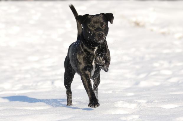 개도 겨울엔 춥다! 겨울나는 법 7가