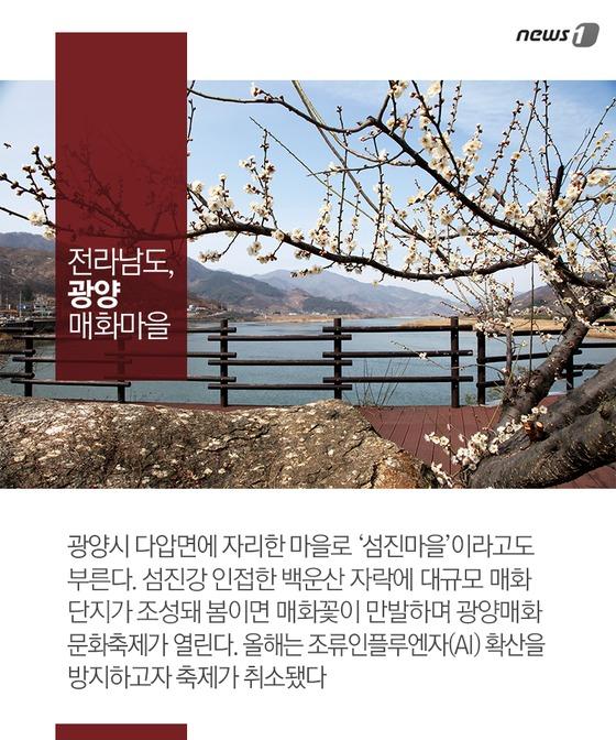 '봄의 전령사' 전국 대표 매화 명소