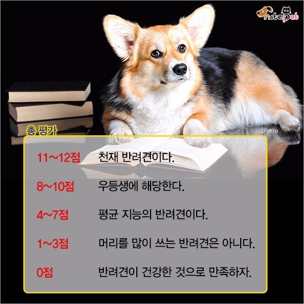 우리 강아지, 얼마나 똑똑할까?