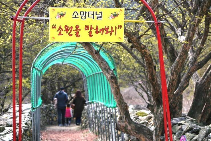수도권 최고의 산수유 꽃길 걷기