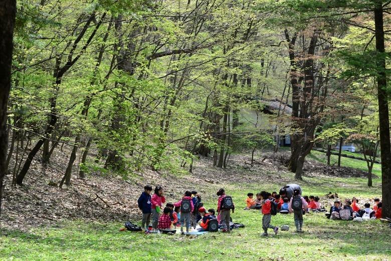 속리의 숲에서 찬란한 봄을 만나다
