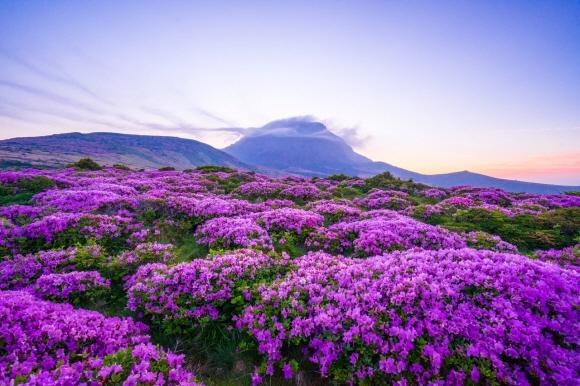 봄의 끝자락 첫사랑 같은 '분홍빛'