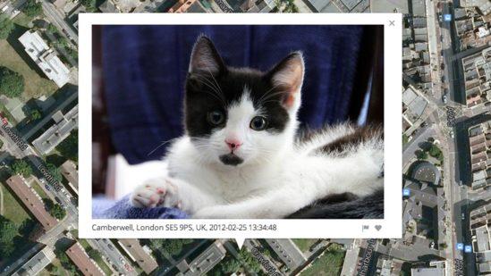 인터넷이 당신의 고양이 사진으로부터